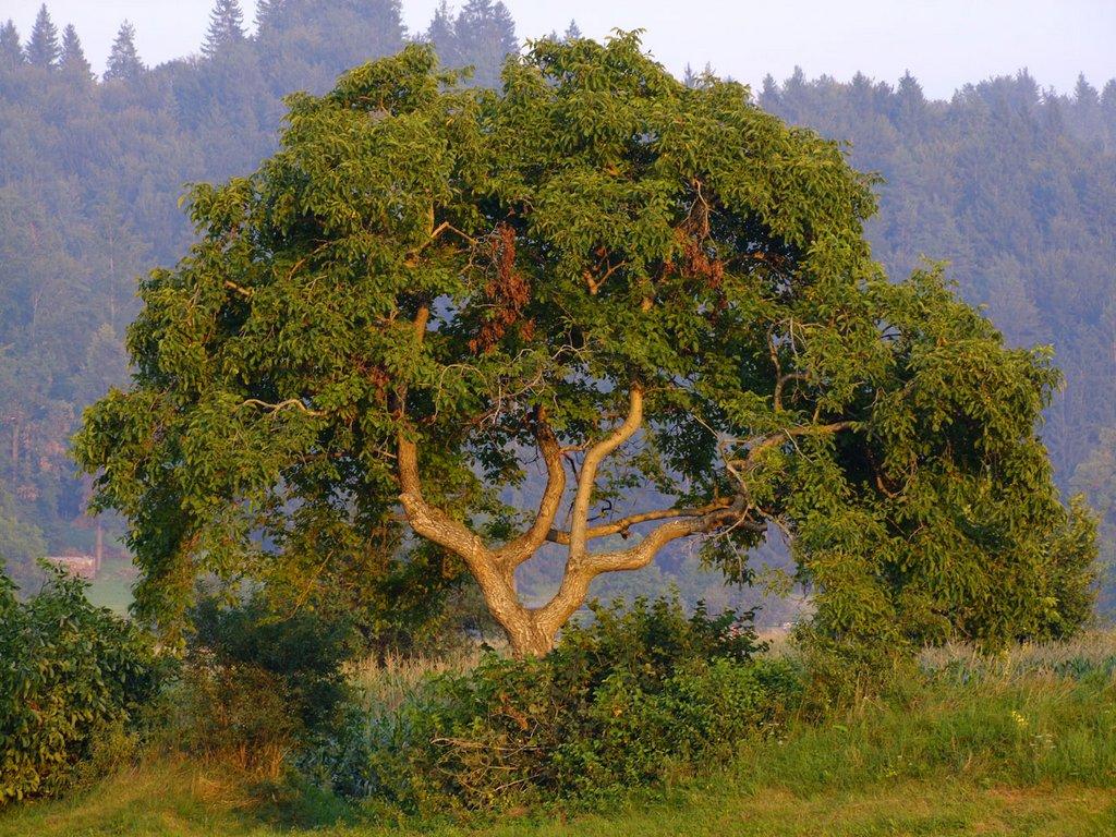 Trees102514