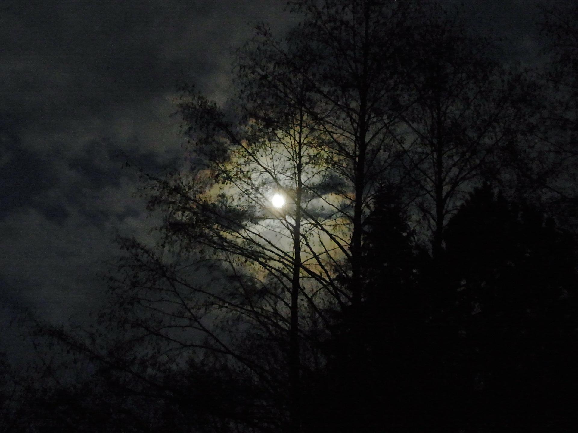 moonforestnight112115